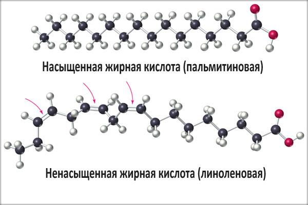 Функции ненасыщенных жирных кислот в питании человека